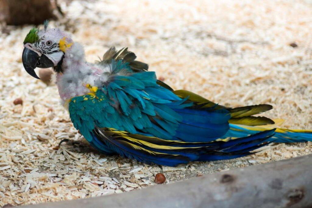 Картинки линька у птиц